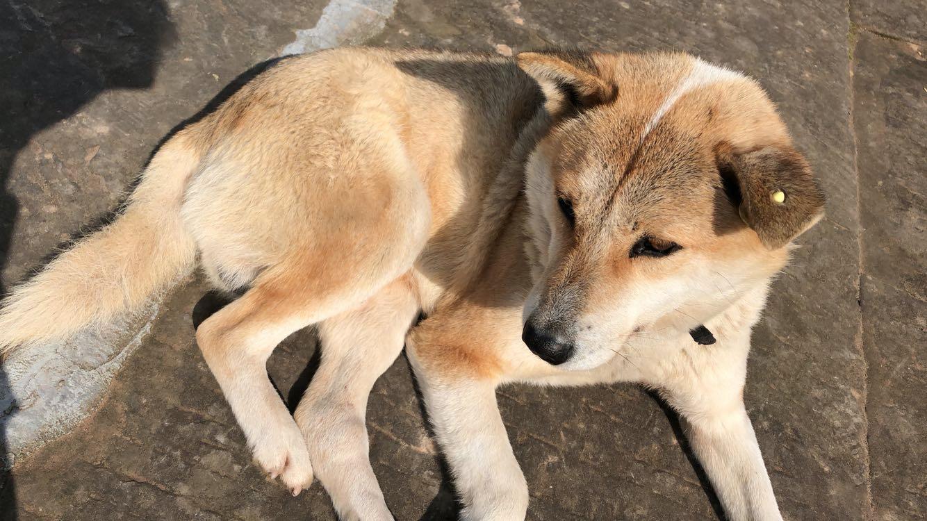 回忆——家里的狗