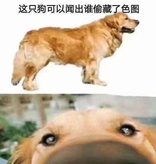 这只狗可以闻出谁偷藏了色图